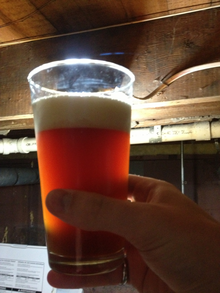 Apricot Ale, Backlit